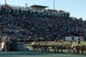 Hornet-Stadium-1